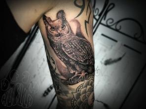 owl36